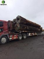 Keruing Timber logs